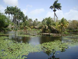 Krokodýlí farma Guamá