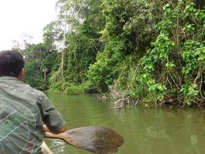 Prales - kanoe