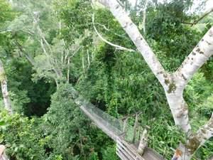 Prales - lanové mosty